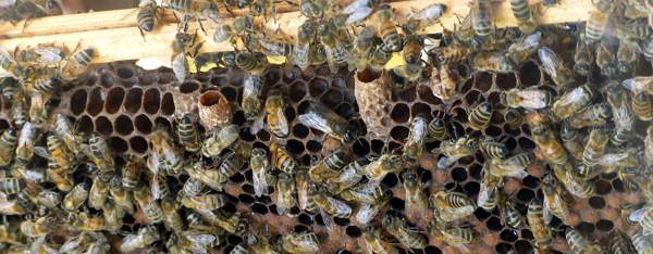 What are all those beehive layers?