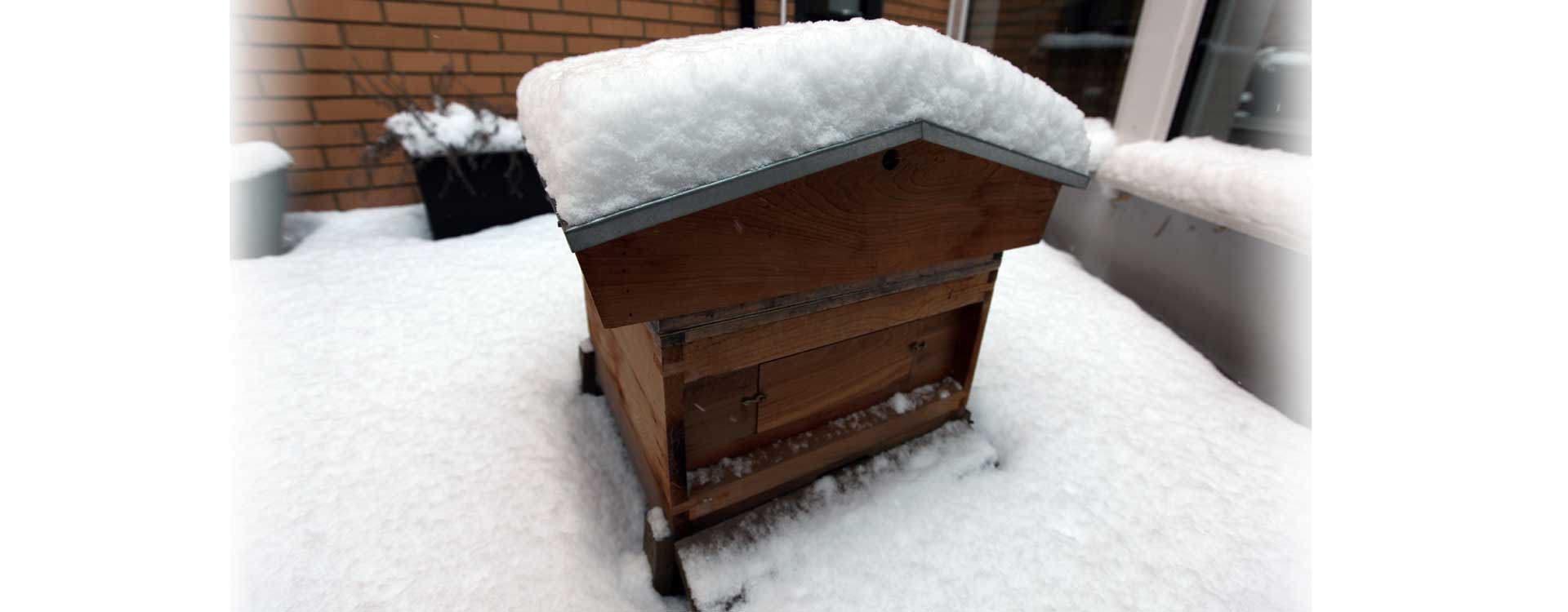 Snow-covered hive in winter