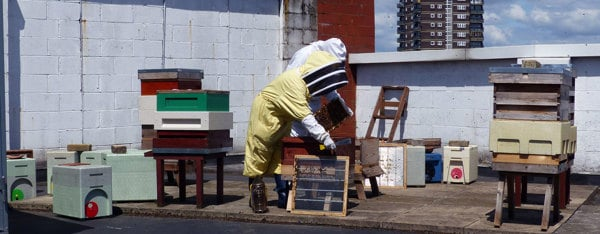 Even more beehives on LMC roof